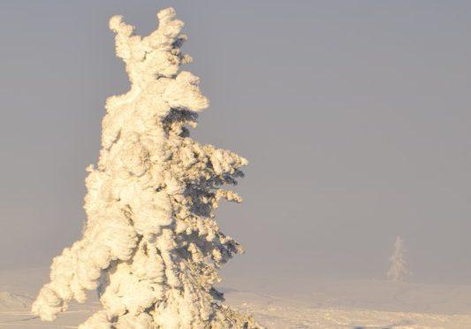 Neulich in Lappland: Eiswüste